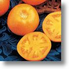 Tomato Pill, Ateronon™, Can Reduce Effects Of Bad Cholesterol By 90%!