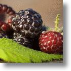 Researches Identify Cancer Prevention Component Of Berries