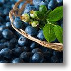 Juicy News! Daily Blueberry Juice Repowers Memory In Seniors