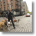 "The Big City Dog Whisperer In New CBS Series ""Dogs In The City"""