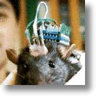 Robo-Rat: Robotic Brain Successfully Implanted In Mobility Impaired Rat