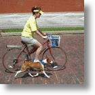 Biking With Buddy: WalkyDog Bicycle Dog Leash