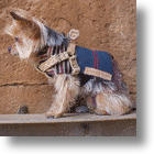 Native American Style Cozy & Elegant Ponchos For Dogs