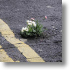 The Pothole Gardener Brings Smiles, Green and Warning to his Community