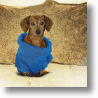 At Last, A Matching Snuggie™ For Dogs!