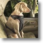 Pet Safety, Freedom &amp; Affordability In Handsome Pet Seat Belt