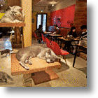 Cat Cafés Finally Coming To The U.S.