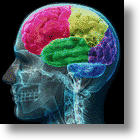 Brain Implant Gives Scientists Wireless Mind Control