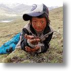 First Regulated Cordyceps (Caterpillar Fungus) Market to Open in Lhasa, Tibet