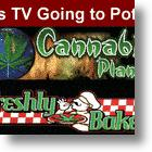 TV's Going To Pot - Cannabis Planet Launches!
