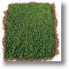 New York Yankee Sod: Create A Lawn Fit For Baseball Pros