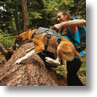 The Amazing RuffWear Web Master Multi-Functional Dog Harness