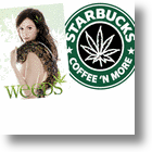 Weed As A Brand: Starbucks Or Botwin Pot Stores? Fact Or Fiction? [Video]