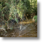 Spider Webs May Soon Make Us All Strong Like Spiderman