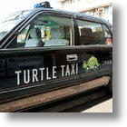 Turtle Taxi: For Travelers Who Like Life In The Slow Lane