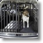 A Safer Way To Travel With Your Dogs: Variocage
