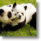 Pets: Would You Like A Dog Or A Panda Bear?