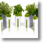Growing Herbs Indoors In Provera&#039;s Mini Power Plant