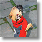 A Classic Dog Sweater Can Still Be Very Cool: The Dog Head