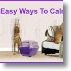 5 Ways To Calm Your Cat