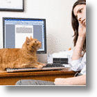 For Cats Who Just Won't Let You Work: The Kitt-In Box®
