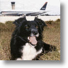 Birds And Planes: Dogs Keep Them From Colliding