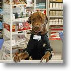 The Doggie In The Window OR How To Attract Customers To A BP Station