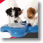 Aikiou Interactive Dog Bowl Feeds Several Canine Needs