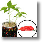 Toys For Cubicle Living – The DIY Hot Pepper Plant