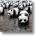 Too Many Pandas & Not Enough ZooKeepers