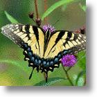 Color Mimicking Technology May Help Banks Cash In On Butterflies For Bank Notes