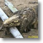 Unknown Beast Washes up on Russian Shores: What is it?