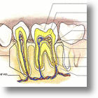 Chew On This: Aircraft That Biomimic The Architecture Of A Tooth
