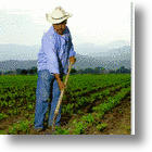 Cornucopia? - An Opportunity For Mexican Farmers