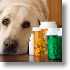 Non-Steroidal Pain Medicine For Dogs Available Soon