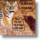 Size Of Tiger Brain Challenges Scientific Assumptions About Social Animals