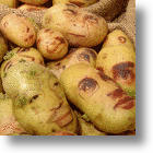 You Say Potato, I Say AHHHH! Creepy Potato Portraits