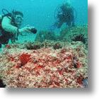 Want To Become A Coral Reef When You Die?