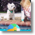 Protect Your Pet From Drowning With The Safety Turtle Alarm System