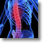 Stem Cell Treatment Heals Spinal Cord Injuries In Mice