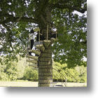 Play In The Treetops With CanopyStair
