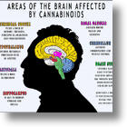 THC In Cannabis Has Potential Therapeutic Effects On Alzheimer's Disease