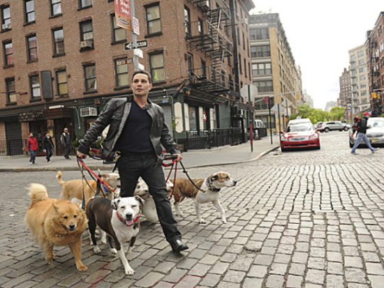 Justin Silver walking his own dogs: photo credit: Heather Wines, via cbsnews.com