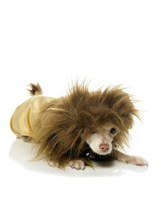 She'll never know who I really am.: Lion King Dog Costume