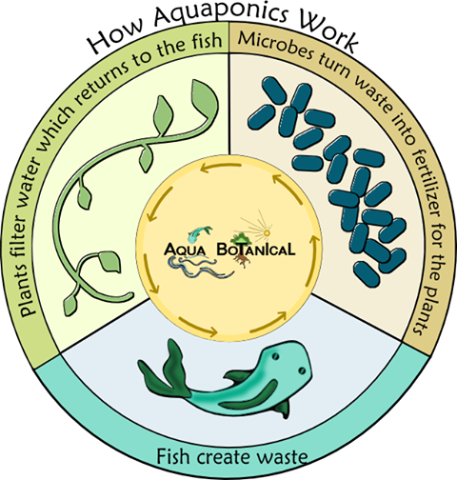 How aquaponics work: image via facebook.com