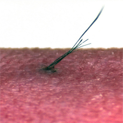 Bioengineered hair from follicle in mouse: © Tokyo University of Science