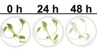 Plant detection stages: time to get out!