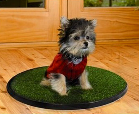 Go Spot Indoor Portable Dog Potty