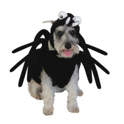 What do you THINK I'm supposed to be?  A black octopus?: Spider Dog Costume
