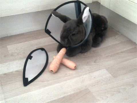 EesyEat4Pets e-collar even fits a pet rabbit: © EesyEat4Pets.com